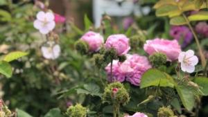 Plantedesign
